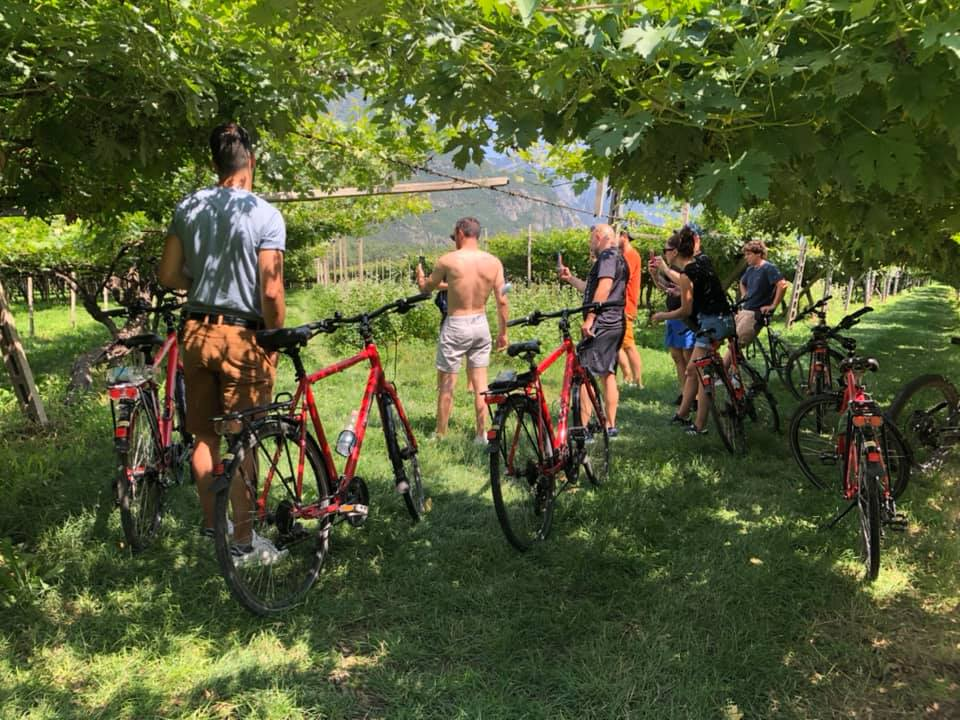 Two intense days between Valdadige and Valpolicella, nature and centenary vineyards, ra ...
